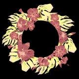Struttura tropicale del cerchio con l'ibisco e motivo tropicale dipinto a mano di estate dell'acquerello di Monstera con l'ibisco Fotografia Stock Libera da Diritti