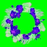 Struttura tropicale del cerchio con l'ibisco e motivo tropicale dipinto a mano di estate dell'acquerello di Monstera con l'ibisco Fotografie Stock