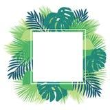 Struttura tropicale di logo delle foglie illustrazione vettoriale