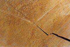 Struttura, una sezione di un tronco di un albero di un pino Immagini Stock Libere da Diritti