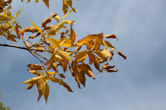 Struttura variopinta delle foglie in autunno Fotografia Stock
