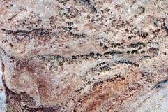 Struttura variopinta vicina di struttura della pietra del mare Fotografia Stock Libera da Diritti