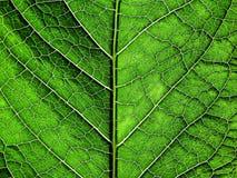 Struttura verde fotografie stock libere da diritti