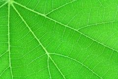 Struttura verde del foglio Immagini Stock Libere da Diritti