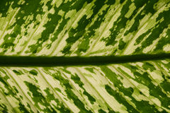 Struttura verde del foglio Fotografie Stock