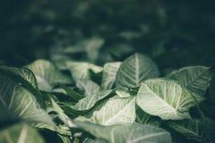 Struttura verde del foglio Fondo di struttura della foglia nello stile d'annata fotografia stock