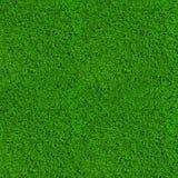 Struttura verde del fondo dell'erba del prato inglese alta Immagine Stock Libera da Diritti