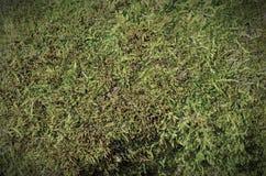 Struttura verde del fondo del muschio immagine stock