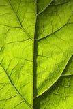 Struttura verde della foglia Immagini Stock