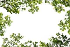 Struttura verde della foglia del ramo per l'entrata del testo Fotografie Stock