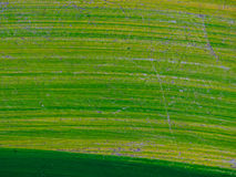 Struttura verde della natura Fotografie Stock