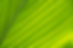 Struttura verde di permesso Immagine Stock