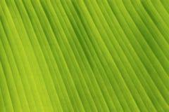 Struttura verde fresca della foglia della banana Fotografie Stock