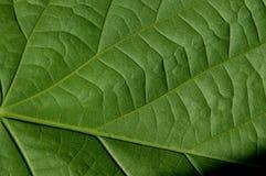 Struttura verde frondosa delle foglie verdi immagini stock