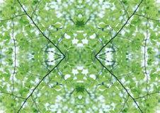 Struttura verde   Modello floreale   Elemento di progettazione   Contesto strutturato fotografia stock
