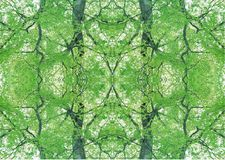 Struttura verde   Modello floreale   Elemento di progettazione   Contesto strutturato fotografie stock libere da diritti