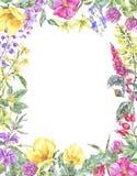 Struttura verticale floreale medicinale di estate dell'acquerello, pianta dei Wildflowers illustrazione di stock