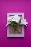 Struttura vuota della foto con il mazzo di Alstroemeria bianco su cremisi Fotografie Stock Libere da Diritti