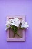 Struttura vuota della foto con il mazzo di Alstroemeria bianco sulle sedere lilla Fotografie Stock Libere da Diritti