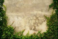 Struttura vuota della parete dell'erba verde come fondo Immagine Stock Libera da Diritti