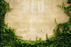 Struttura vuota della parete dell'erba verde come fondo Immagini Stock Libere da Diritti