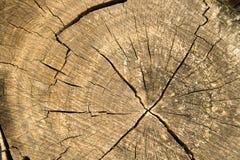 Struttura wood003 Immagini Stock