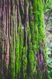 Strutturato di legno con muschio verde Fotografie Stock Libere da Diritti