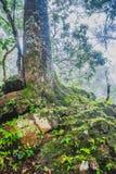 Strutturato di legno con muschio verde Fotografia Stock Libera da Diritti