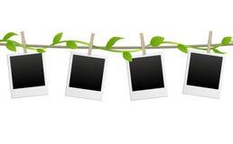 Strutture in bianco della foto con la pianta verde Immagine Stock