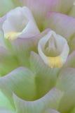 Strutture dei fiori. Immagini Stock