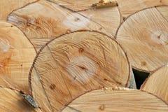 Strutture del legname: Sezione trasversale dei tronchi di recente abbattuti del faggio Immagini Stock Libere da Diritti
