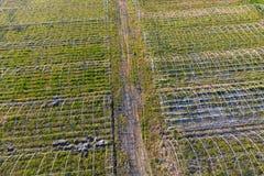 Strutture delle serre Costruzione delle serre nel campo Agricoltura, agrotechnics di terra chiusa fotografia stock