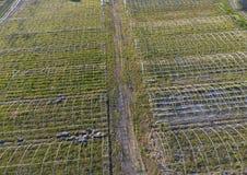 Strutture delle serre, vista superiore Costruzione delle serre nel campo Agricoltura, agrotechnics di terra chiusa Immagini Stock Libere da Diritti