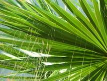 Strutture di foglia di palma Immagini Stock