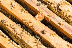 Strutture di legno del favo con le api Fotografia Stock