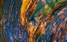 Strutture di legno del tronco di albero Fotografia Stock Libera da Diritti