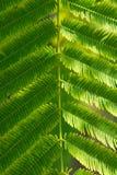 Strutturi il piccolo fondo verde della foglia, fondo della natura Immagine Stock