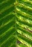 Strutturi il piccolo fondo verde della foglia, fondo della natura Fotografie Stock