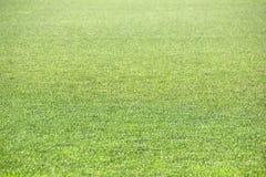 Strutturi l'erba verde per lo sport di calcio Campo di calcio solare luminoso, struttura di sport Campo di calcio con bella luce  immagini stock libere da diritti