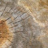 Strutturi la sezione di vecchio albero Fotografie Stock