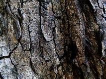 Strutturi la superficie della corteccia di albero immagini stock libere da diritti