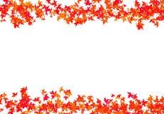 Strutturi le foglie rosse di un acero tessuto in una congratulazione del carina di autunno della struttura del bordo con un bianc Fotografie Stock