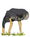 Struzzo illustrazione vettoriale