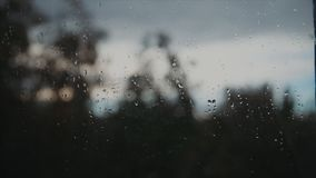 Strzał okno zakrywający z padać opuszcza z drzewami za nim zbiory wideo