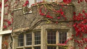 Strzał stary kamienny balkon zakrywający w winogradach zbiory wideo