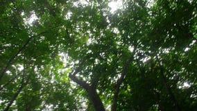 Strzał sunrays i drzewa zbiory wideo