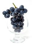 Strzał wiązka czarni winogrona. Zdjęcie Royalty Free