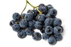 Strzał wiązka czarni winogrona. Obraz Royalty Free
