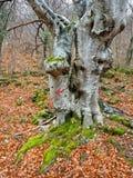 Strzała na drzewie Obrazy Royalty Free