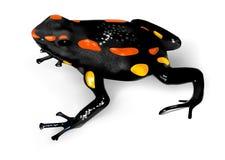strzałki żaby jad Rio Santiago ilustracja wektor